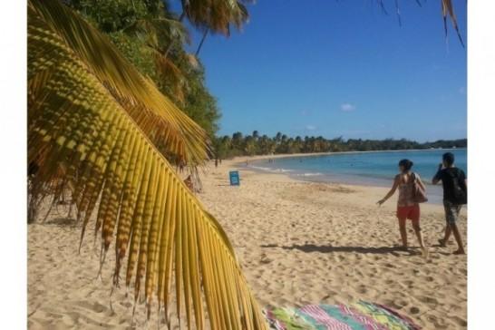 Martinique Club 3* Supplément single OFFERT !