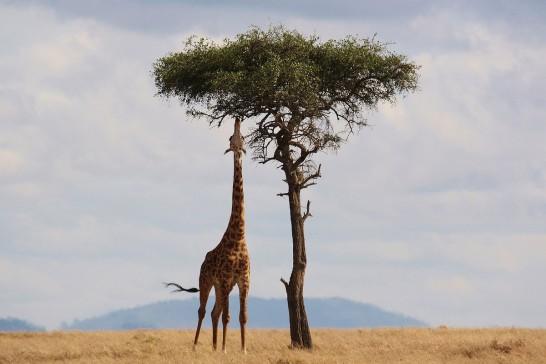 Découverte du Kenya -50% sur votre supplément single