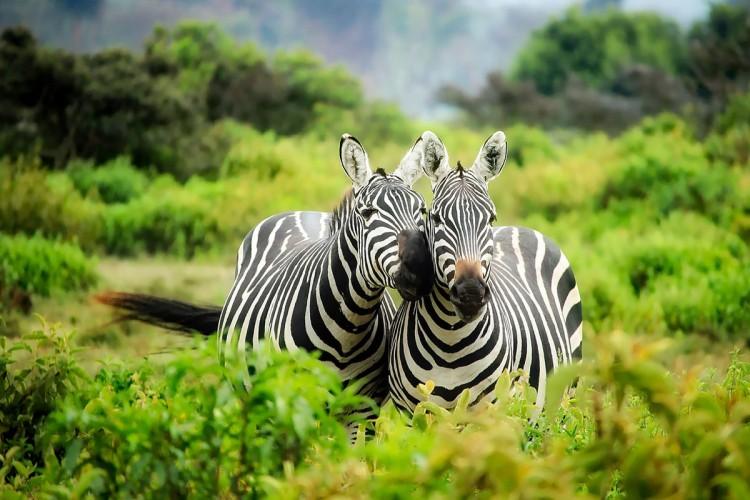 Découverte du Kenya