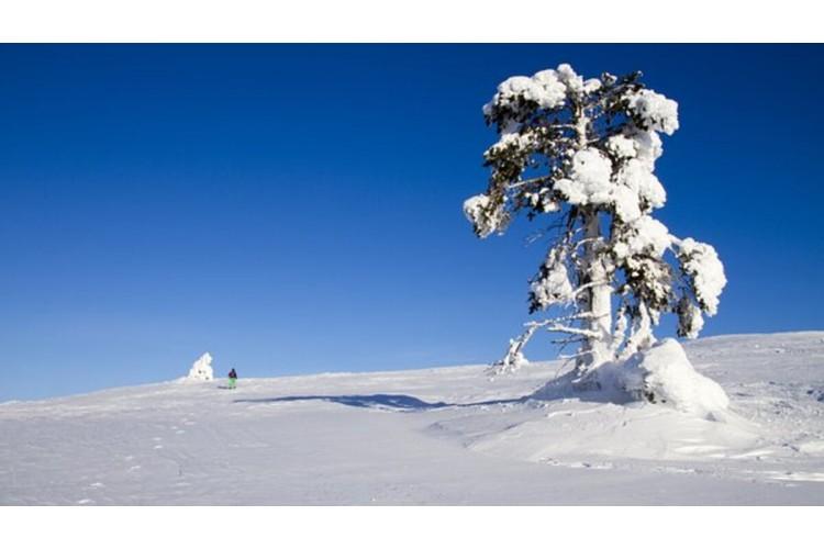 Noël en Auvergne : Rando Raquettes