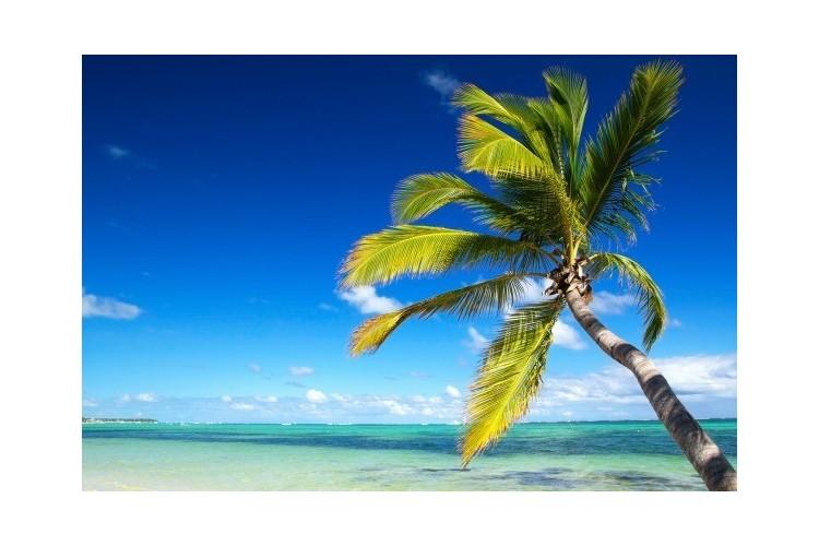 Rép. dominicaine/Punta Cana  Club 5*